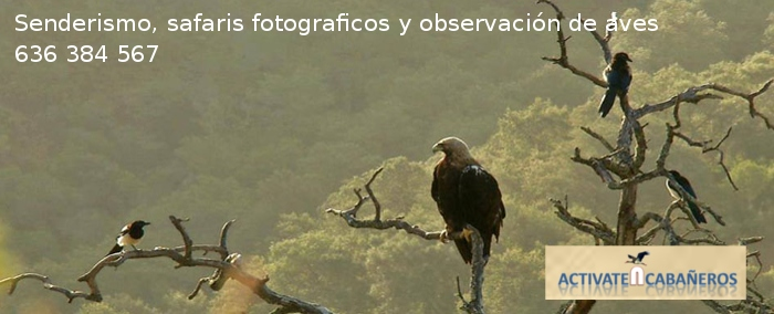 Activate en Cabañeros