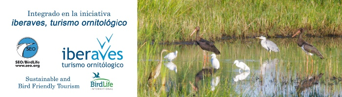 Turismo Ornitológico y Birdwatching