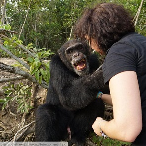 Lonely chimp