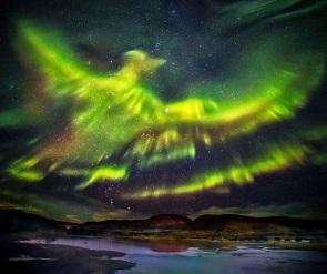 Phoenix aurora