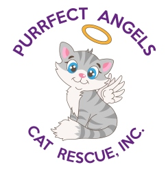Purrfect Angels Cat Rescue, Inc.