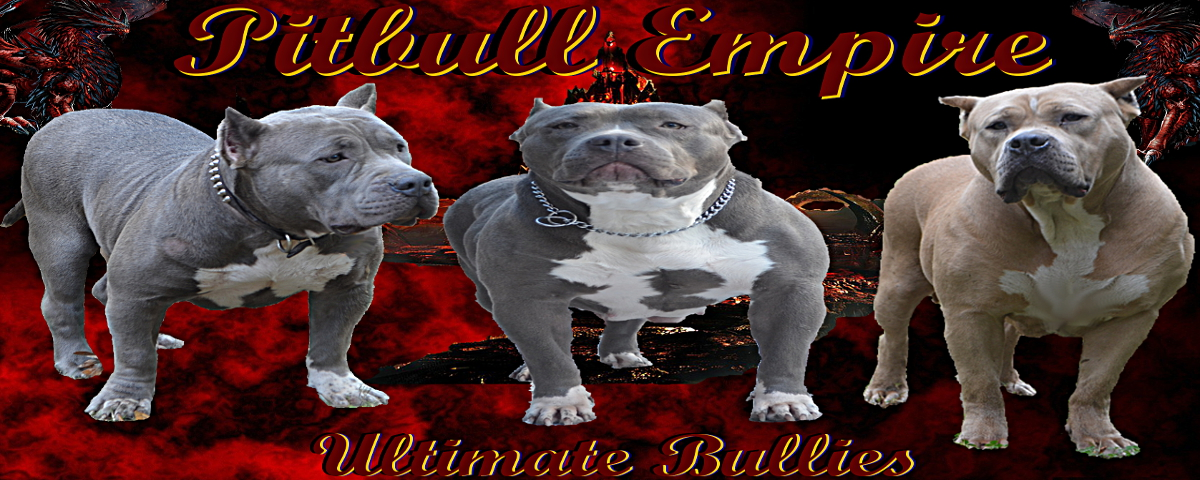 bully female pitbulls,bully pitbulls,XXL pitbull puppies for sale Georga,huge pitbull puppies