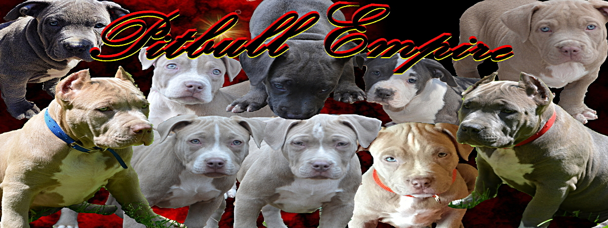 pitbull breeder contract